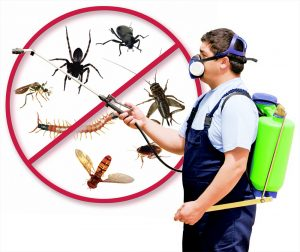 north Phoenix Termite Service